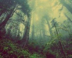 Аокигахара- лес самоубийц в Японии
